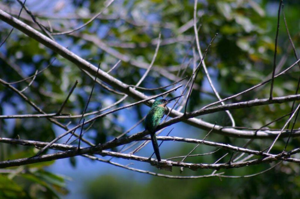 Tobago birding CRW_2279