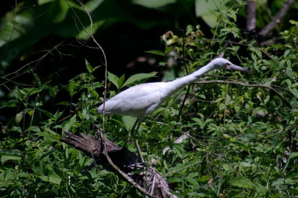 Tobago birding CRW_2283