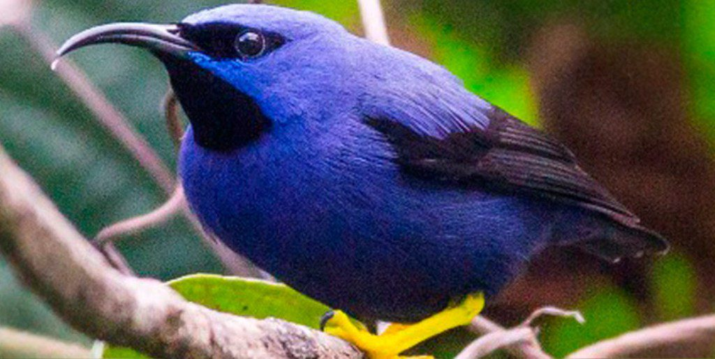 Tobago birding_slider_2