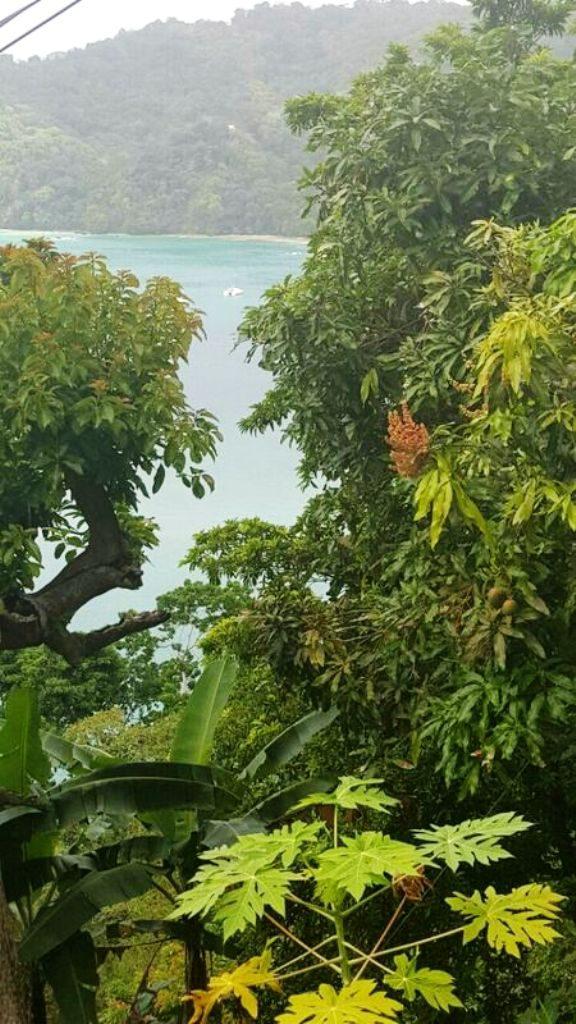 Tobago IMG-20170929-WA0027